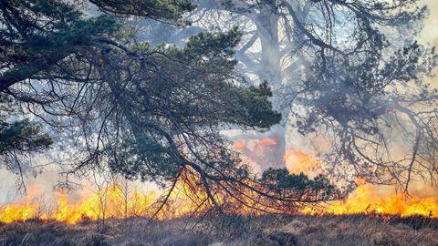 Waldbrand Tschernobyl