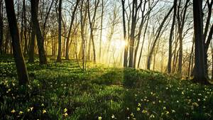 Thema Frühling