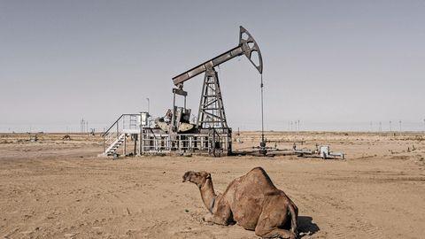 Ein Kamel ruht zwischen den zahlreichen Erdölpumpen