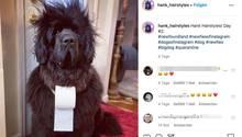 Hund Hank mit zerzaustem Fell und einer Rolle Klopapier um den Hals