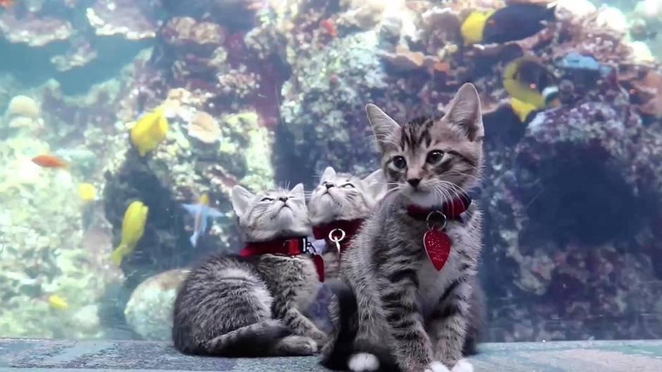 Die fünf Katzen erkunden das menschenleere Aquarium