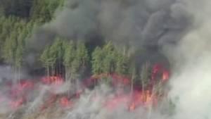 Bedrohen die Waldbrände in der Ukraine den Unglücksreaktor in Tschernobyl?