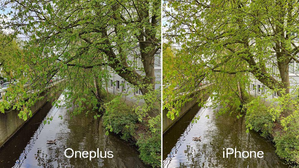 Bei Tag macht das Oneplus 8 Pro sehr detailreiche, farbechte Fotos. Das iPhone 11 Pro (rechts) wirkt im Vergleich etwas wärmer