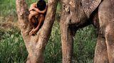 Ein junger Mann schläft in einer Astgabel, daneben steht ein schlafender Elefant