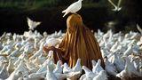 Eine verhüllte Frau fütter zahlreiche weiße Tauben