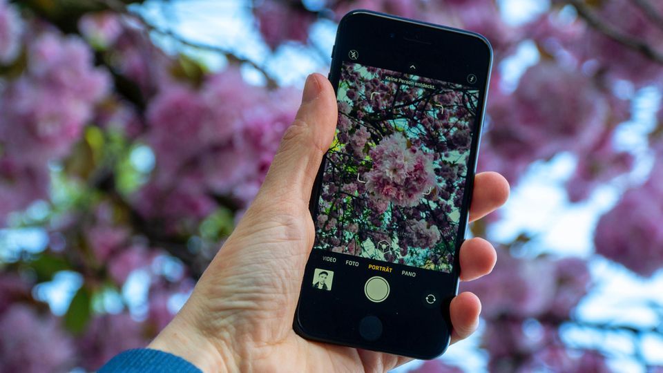 Das iPhone SE unterstützt den Porträtmodus, dennoch muss man bei der Kamera Kompromisse zu den Pro-Modellen eingehen.