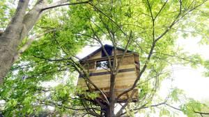 In Texas lebt ein Arzt seit drei Wochen in dem Baumhaus seiner Kinder (Symbolbild)