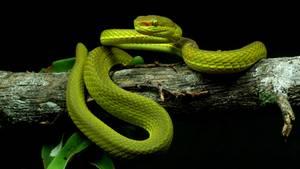 Die grüne, kleine Schlange