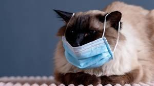Eine Katze trägt einen Mundschutz