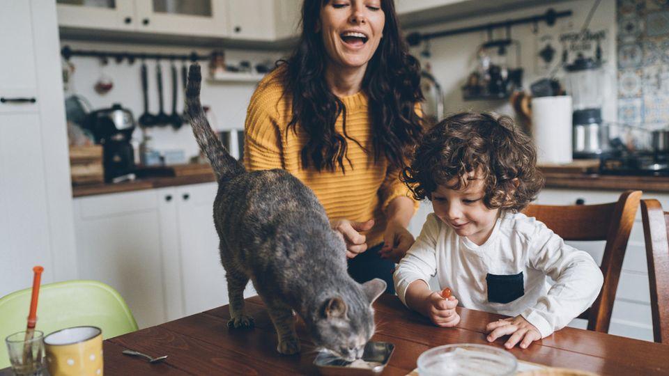 Die Katze gehört für viele Menschen zur Familie - und wird entsprechend umsorgt