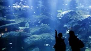 Verschiedene Fische schwimmen in einem Aquarium im Sumida-Aquarium in Tokio