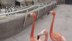 Flamingo-Spaziergang Zoo