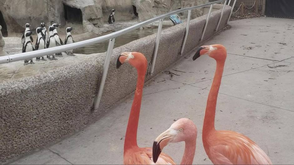 Flamingo-Spaziergang Zoo