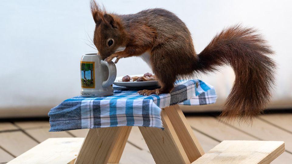 nachrichten deutschland - bierbank für eichhörnchen