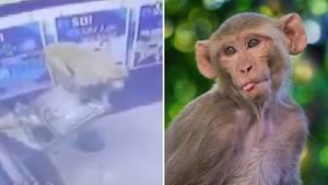 Frecher Affe zerstört einen Geldautomaten.
