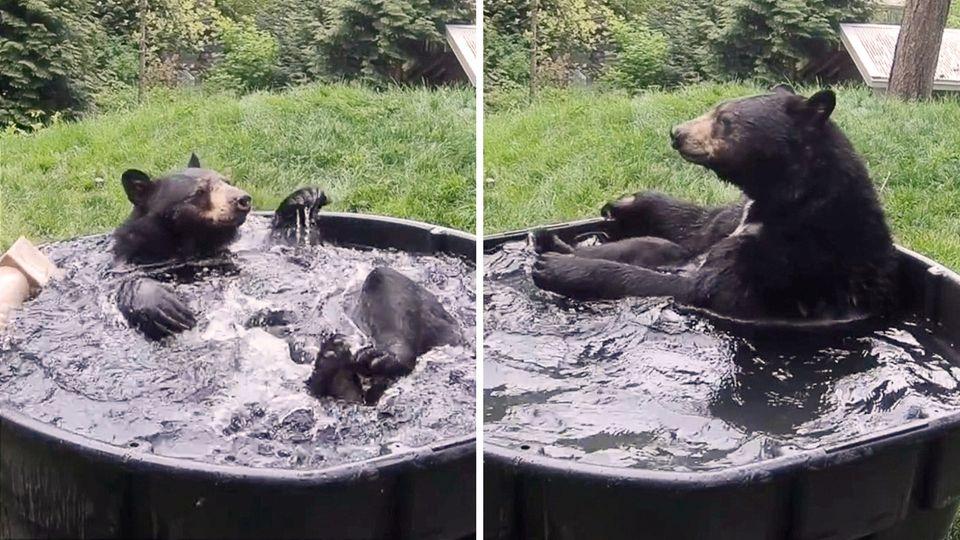 Schwarzbär Takoda räkelt sich in seiner Badewanne.