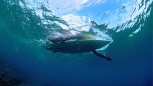 Ein Surfer paddelt im Wasser