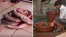 Von einem Wildtiermarkt in China soll das Coronavirus stammen (Symbolbild)