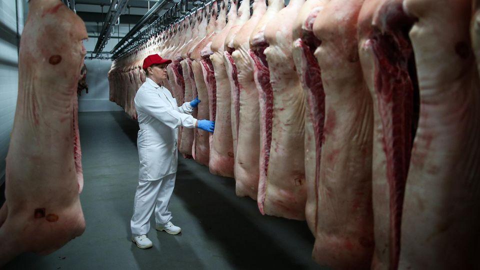 """Fleischindustrie: """"Eine absehbare Katastrophe"""": Warum das Coronavirus in Schlachthöfen leichtes Spiel hat"""