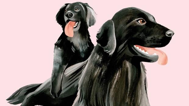 Zwei illustrierte Hunde mit heraushängender Zunge