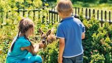 Kinder füttern ein Rehkitz