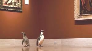 Zwei Pinguine im Museum