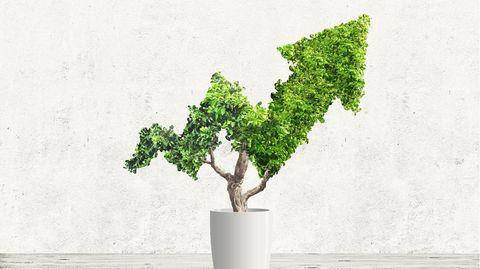 Eine Baumkrone in Aktien-Kursform