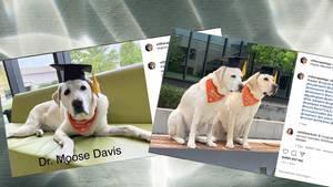 Die Therapiehunde der Virginia Tech bei ihrer Abschlussfeier