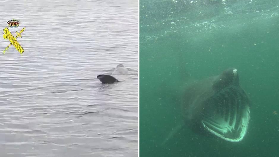 Vor spanischer Küste: Polizei sichtet Riesenhai im Mittelmeer