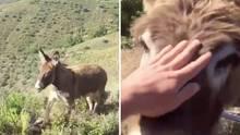 Ismael Fernández besucht seinen Esel Baldomera in der bergigen Landschaft in Südspanien.