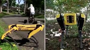 Der Roboterhund kann Menschen an den Abstand erinnern und auch beim Schafe hüten eingesetzt werden.
