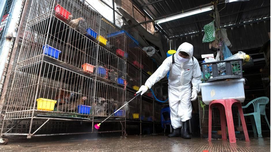 Ein Arbeiter sprüht auf dem Chatuchak-Markt Desinfektionsmittel als Vorsichtsmaßnahme gegen die Verbreitung des Coronavirus