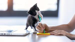 Katzenbaby knabbert an Stift