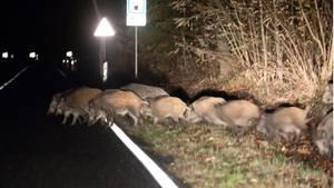 nachrichten deutschland - wildschweine