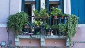 Grün-bepflanzter Balkon