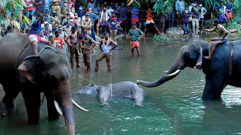 Helfer bergen das tote Tier unter den Augen zahlreicher Schaulustigen aus dem Fluss