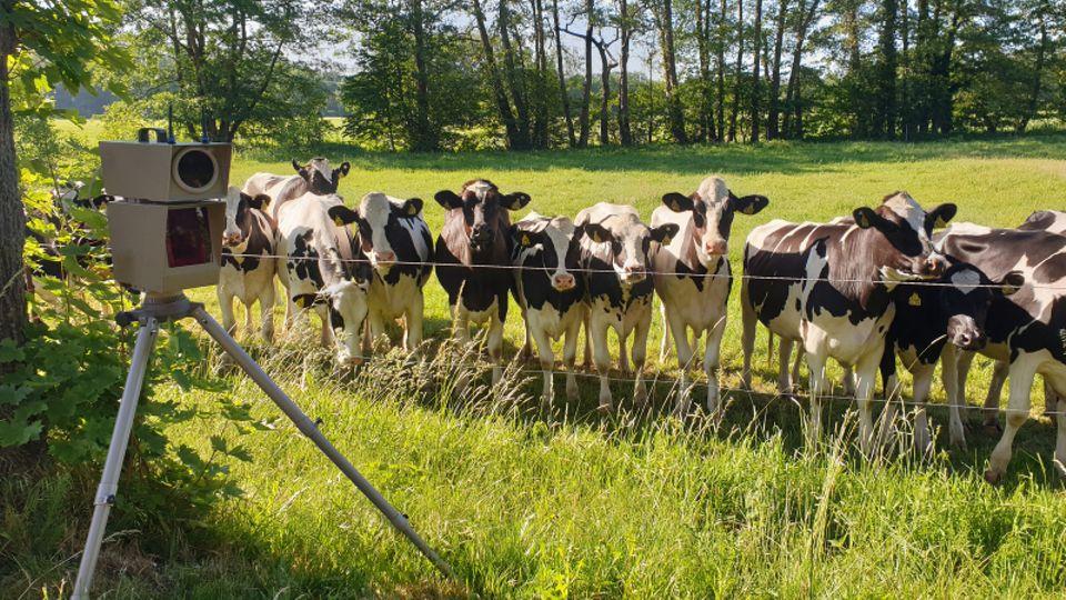 Radarkontrolle lockt zahlreiche Rinder an