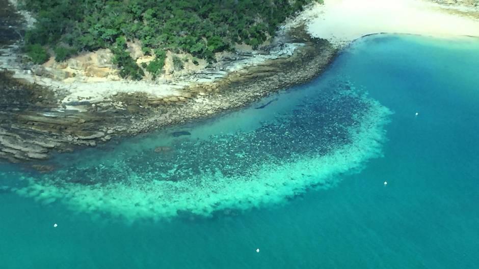 Klimawandel: Weltnaturerbe Great Barrier Reef in Gefahr:  Das Meer wird zu warm für die Korallen