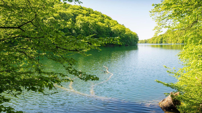 Bild 1 von 11der Fotostrecke zum Klicken:   Schmale Luzin in Mecklenburg-Vorpommern: Wo sich Otter und Adler wohlfühlen  Der Naturpark Feldberger Seenlandschaft liegt im Südosten des Bundeslandes: Bei der Schmalen Luzin handelt es sich um einen sogenannten Rinnsee, also eine ehemalige Rinne für Schmelzwasser. Das erklärt sein ungewöhnliches Aussehen: Der See ist sehr lang, schmal und tief.Ein weiteres Merkmal des Sees ist die handbetriebene Fähre, die den Ort Feldberg mit dem Ortsteil Hullerbusch verbindet Drei Badestellen gibt es: eine am Nordufer, den FKK-Strand am Westufer sowie die Badestelle im Ort Carwitz.