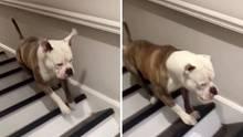 Optische Täuschung: In welche Richtung bewegt sich der Hund?