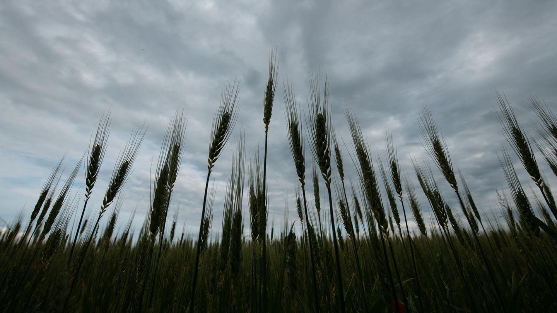Wetter in Deutschland - Wolken über einem Feld