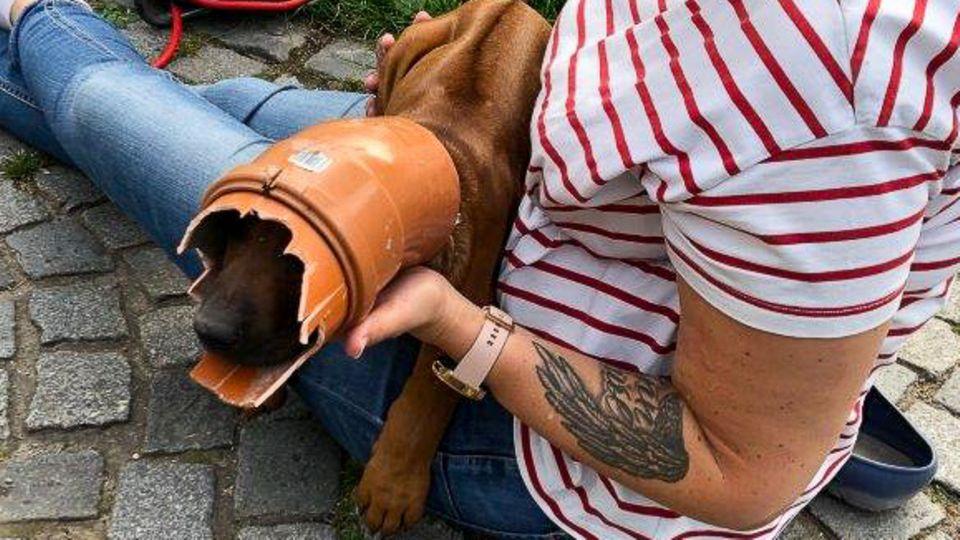 Nachrichten aus Deutschland: Ein Hund in Bochum steckt in einem Rohr fest