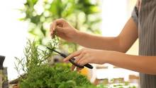 Mithilfe eines Smart-Gardenkönnen Sie Kräuter, Gemüse und Obst das ganze Jahrzuhause anbauen