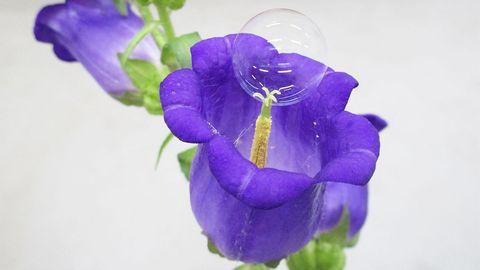 Seifenblase auf Blüte