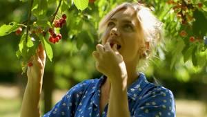 Discounter oder Obst-Bude? Welche Kirschen schmecken am besten?