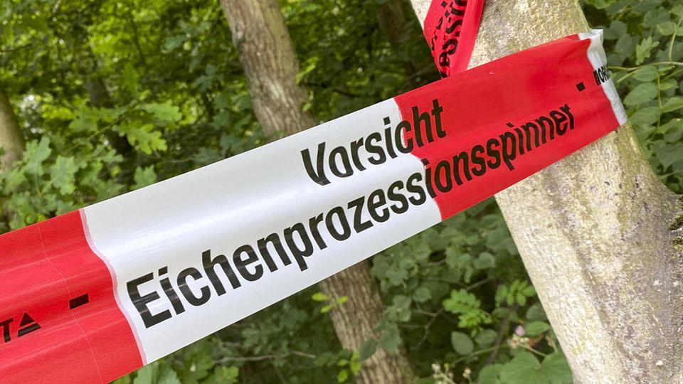 Von Mai bis August werden vielerorts Parks und Wälder wegen der EPS-Raupen gesperrt.