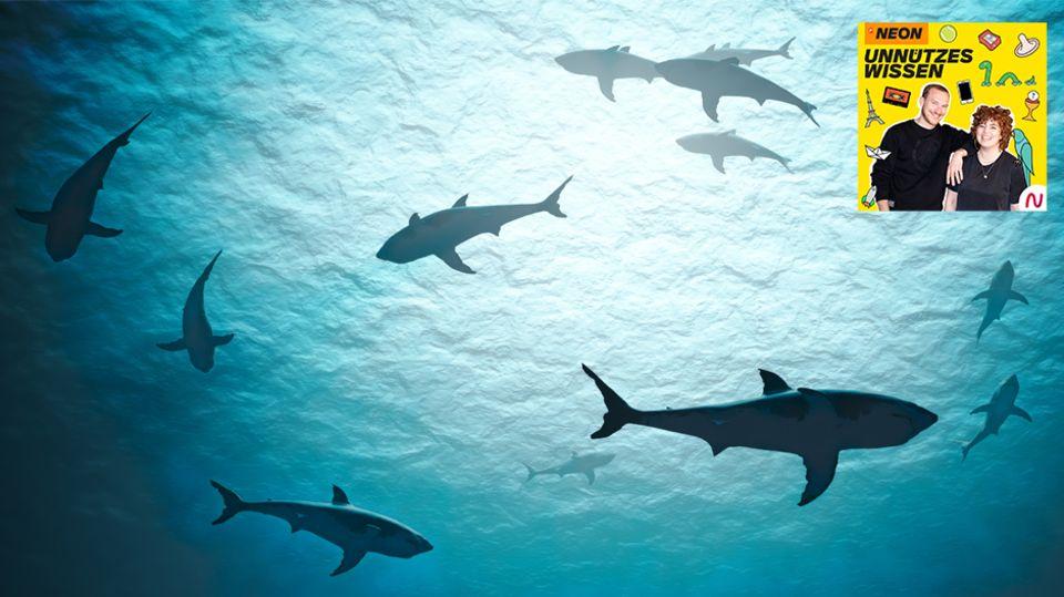Unnützes Wissen – Tiere: Der Mensch fischt jährlich etwa 100 Millionen Haie – so groß ist das Problem des Haisterbens wirklich