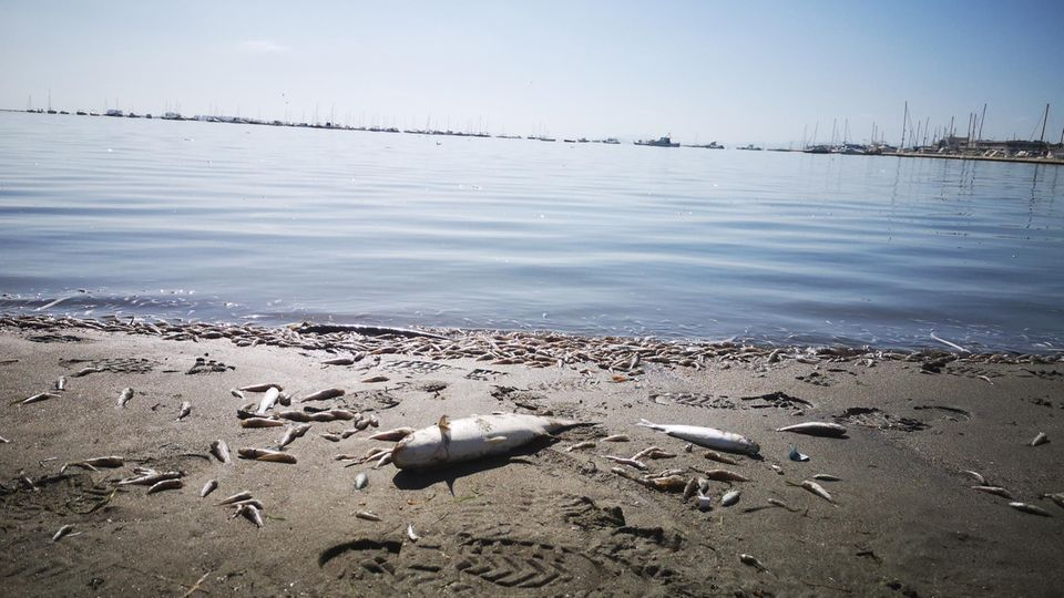 Rätselhaftes Fischsterben entlang der Elbe