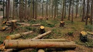 Nachrichten aus Deutschland – Wald in Hamburg illegal abgeholzt