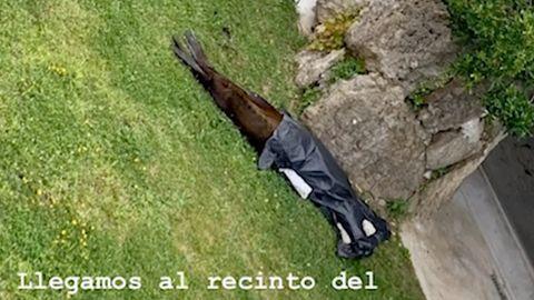 Influencerin postet erschreckende Bilder: Unhaltbare Zustände in spanischem Zoo